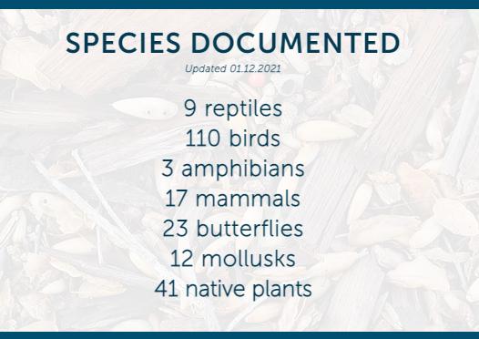 Westmonts campus teems with species diversity.