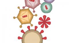 COVID-19 vaccine wards off virus