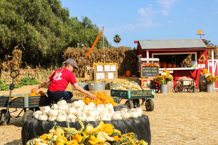 Piles of Pumpkins at Lane Farms